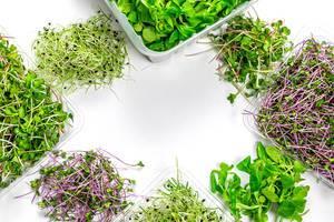 Gesunder Lebensstil Rahmen aus Mikro Grün, Kresse, Radieschen und Maissalat auf weißem Hintergrund Top-view