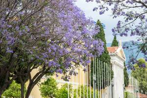 Glycine alley leading up to Zappeion in Athens, Greece