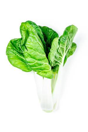 Green fresh cabbage pak choi baby