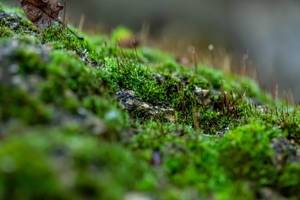 Green moss on the stone