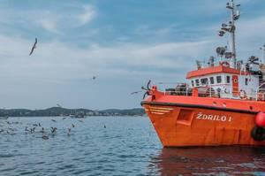 Große Fischerboote und Möwen in Rovinj, auf der Halbinsel Istrien, Kroatien