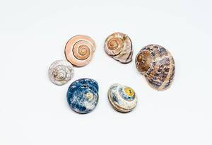 Group Of Colorful Sea Shells