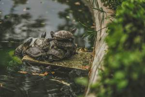 Group Of Turtles Sitting On Fontaine