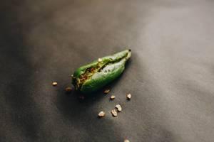 Grüne Chilischote und verstreute Chili-Samen vor dunklem Hintergrund