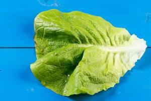 Grüner Kopfsalat auf dem blauen Hintergrund