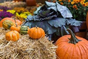 Halloween-Atmosphäre in Downtown Chicago mit kleinen und großen Kürbissen, Heu und Pflanzen (Nahaufnahme)