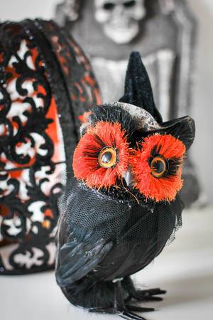 Halloween Black Owl with Witch Hat