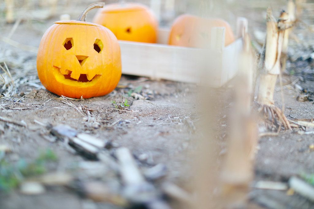 Halloween pumpkins on the ground