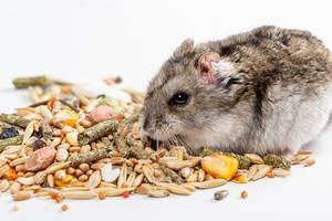 Hamster and hamster food on a white background