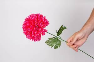 Hand hält eine riesige, pinke Dahlie als Kunstblume vor einen weißen Hintergrund