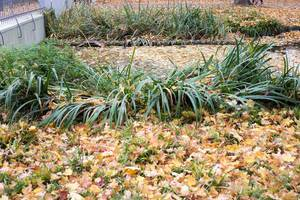 Handlungsbedarf im Garten: Herbstlaub auf dem Rasen