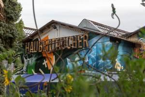Haubentaucher in Berlin
