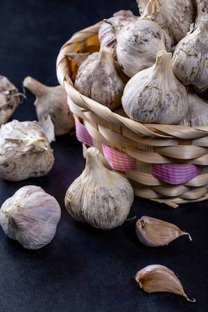Heads and cloves of raw garlic on a dark background