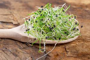 Healthy eating concept. Fresh green onion sprouts in wooden spoon on old wooden background