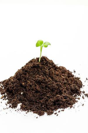 Heap soil with a green plant sprout on white background