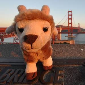 Hennes vor der Golden Gate Bridge