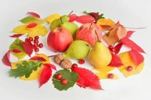 Herbst-Laub und Obst