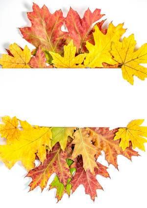 Herbst Rahmen mit bunten Blättern