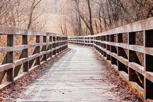 Herbstaufnahme einer laubbedeckten Holzbrücke umgeben von kahlen Laubbäumen einer Parkanlage
