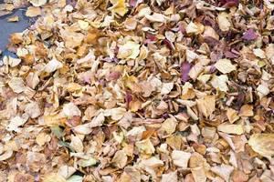 Herbstlaub: gelbe und rote Blätter