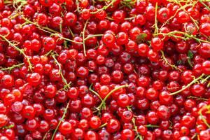 Hintergrundbild mit roten, reifen Johannisbeeren und grünen Stielen