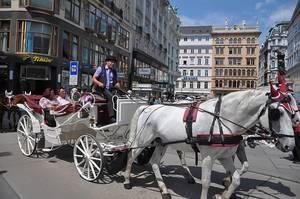 Hochzeitskutsche mit Schimmel in der Großstadt in Österreich