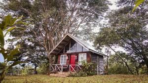 Hölzerne Ferienhütte mit kleiner Veranda unter Bäumen