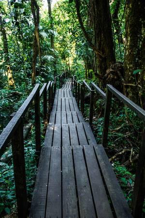 Hölzerner Steg mit Handlauf führt durch Wald