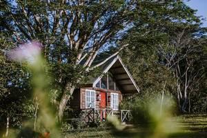 Hölzernes Ferienhaus steht unter Baum in grüner Umgebung in Don Salvador, Negros, Philippinen