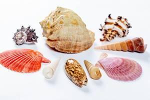 Hübschen Muscheln in verschiedenen Farben und Formen auf weißem Tisch drapiert