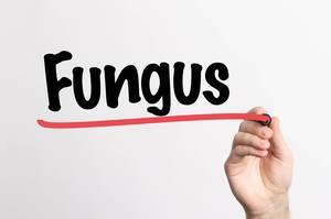 Human hand writing Fungus on whiteboard