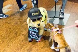 Hund beschnüffelt einen Plüsch-Hund mit einer Boss-Mütze