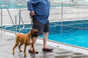 Hund: Boxer