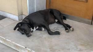 Hund döst vor der Eingangstür