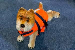 Hund in einer Schwimmweste als Spielzeug - Boot Düsseldorf 2018