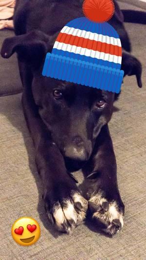 Hund mit Mütze und Emoticon