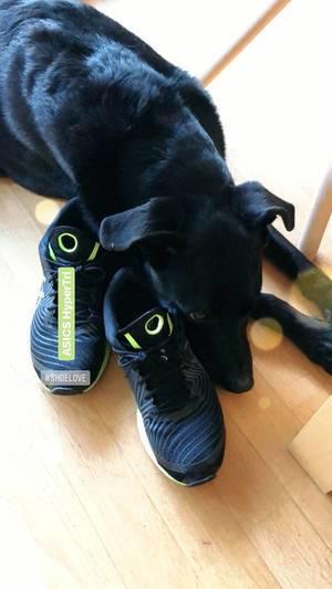 Hund schläft auf Laufschuhen ASICS HyperTri