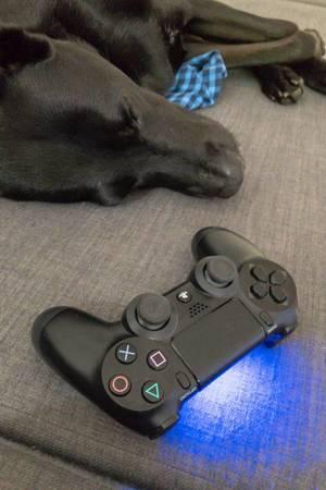 Hund schläft neben einem Playstation 4 Controller
