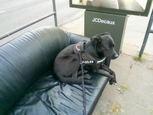 Hund sitzt auf der Couch an einer Haltestelle
