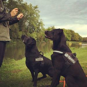 Hundespaß am Decksteiner Weiher #spotty #nesta #köln #cologne #dogs #pet #labrador #laboftheday #instapic #picoftheday #dogfoodporn