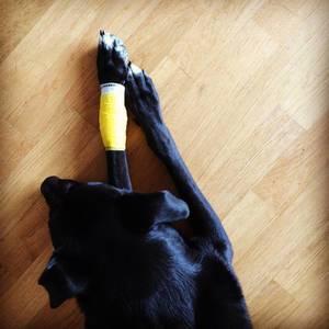 Hundeverband