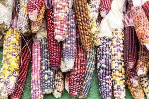 Indian corn - City Market, Chicago