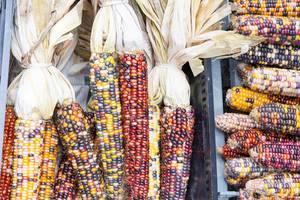 Indischer Mais am City Market in Chicago
