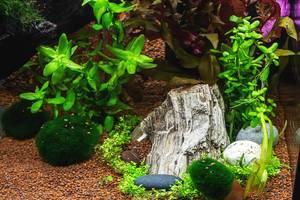 Innenleben eines Aquariums mit verschiedenen Steinen, Algen und Pflanzen