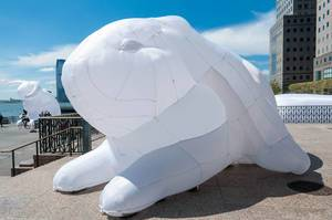 Intrude: White Rabbits in New York