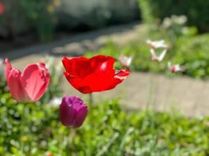 iPhone X schießt Blumenfotos mit Bokeh