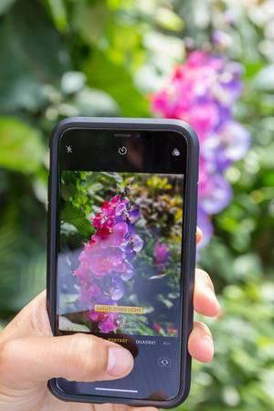 Junge Frau fotografiert mit Handy eine Orchidee im Wiener Schmetterlinghaus