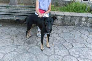 Junge Frau streichelt den Rücken ihres Schwarzen Labradors