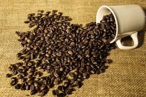 Kaffeebohnen aus einer weißen Tasse verschüttet