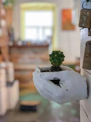Kaktus in zwei Händen aus Gips